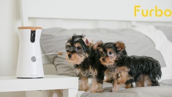 【SNSマーケティング募集】愛犬同伴出勤可能★ペットテク市場で急成長を続ける「Furbo(ファーボ)」